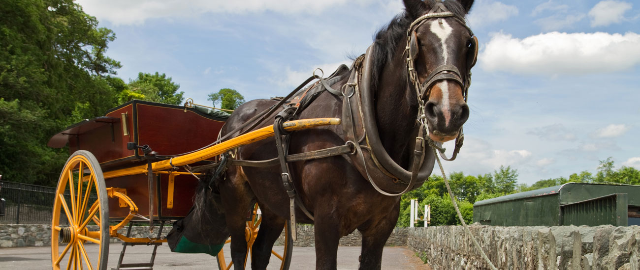 Horse-and-Cart